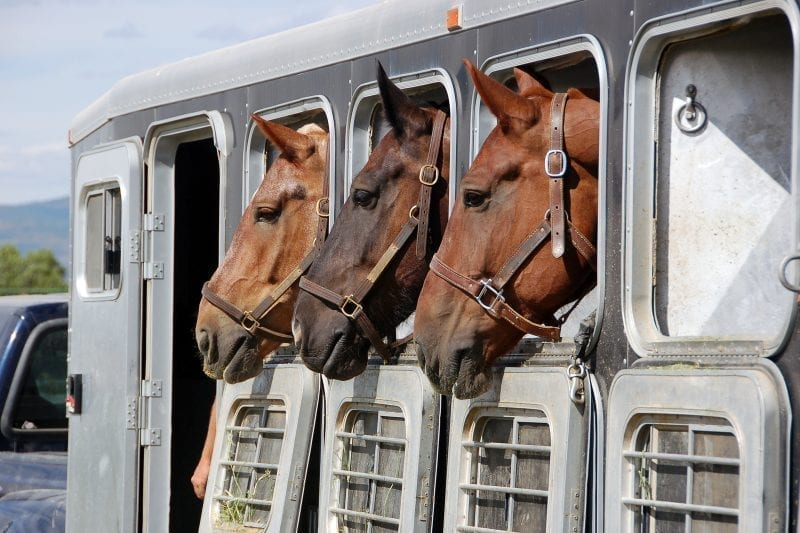 private sale horse float finance;private sale loans;buying a private sale horse float;private sale horse float finance tips;saddle loans;horse saddle;tack loans;personal loans;horse float loan calculator, horse float loans, icredit horse float finance, 2hal, 3hal, 2hsl, gooseneck trailer, stock trailer, horse floats for sale, used horse floats, horse float loans australia, horse events, showjumping, rodeo, campdrafting, eventing, equitana,jumping,